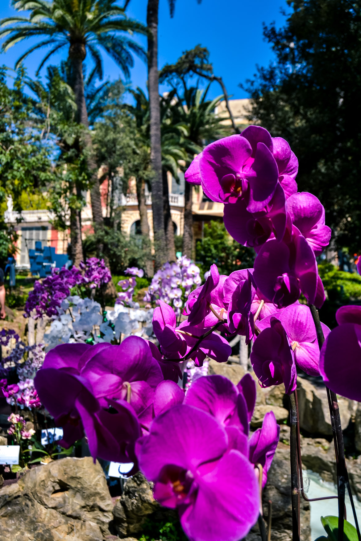 Genova Euroflora orchidee - in Viaggio con Monica