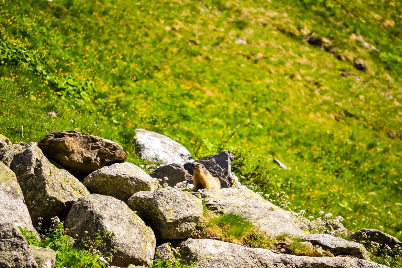 Val Ferret marmotta - In Viaggio Con Monica
