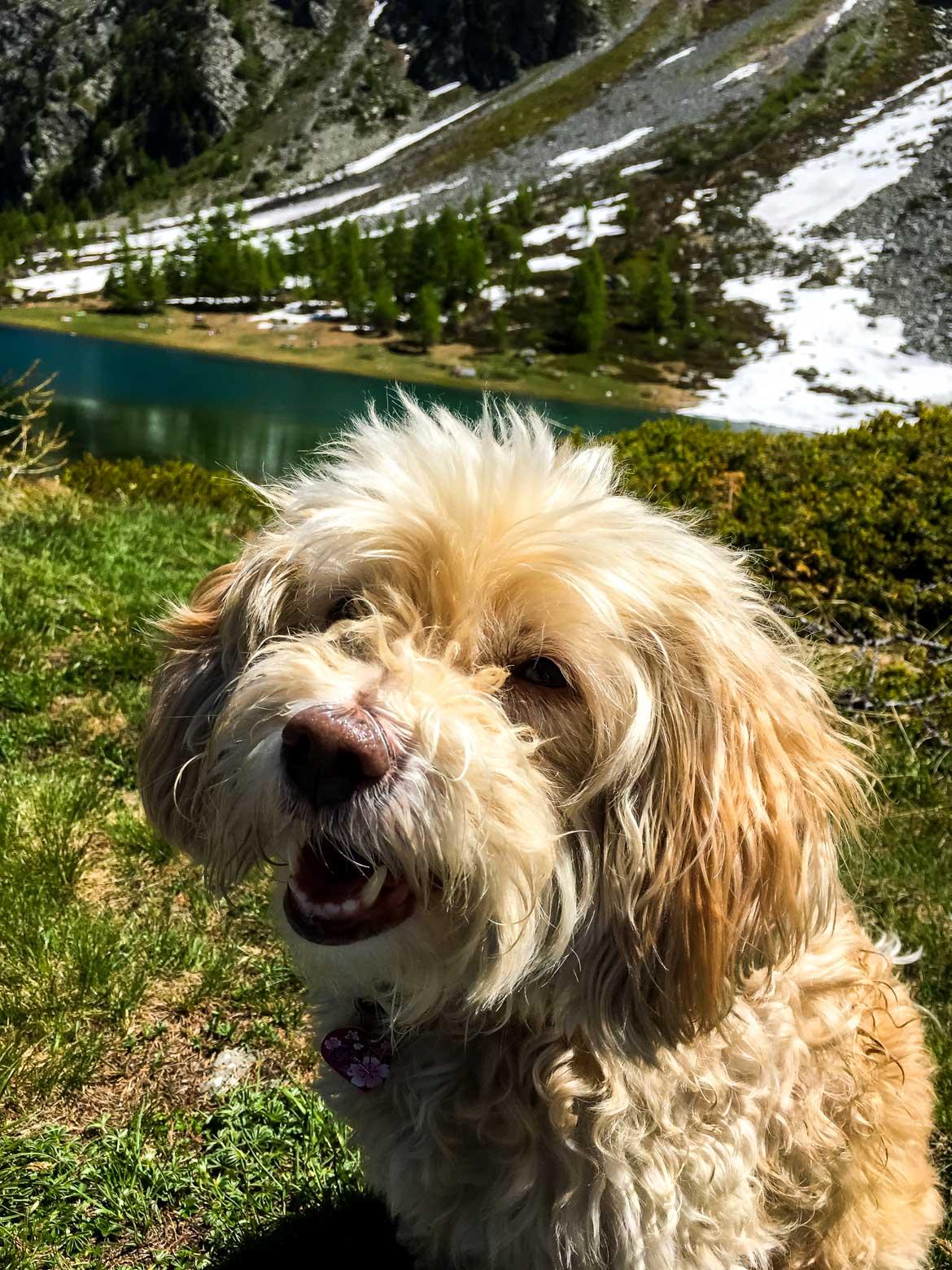 Valle Aosta Lago Arpy vacanza con il cane - In Viaggio Con Monica