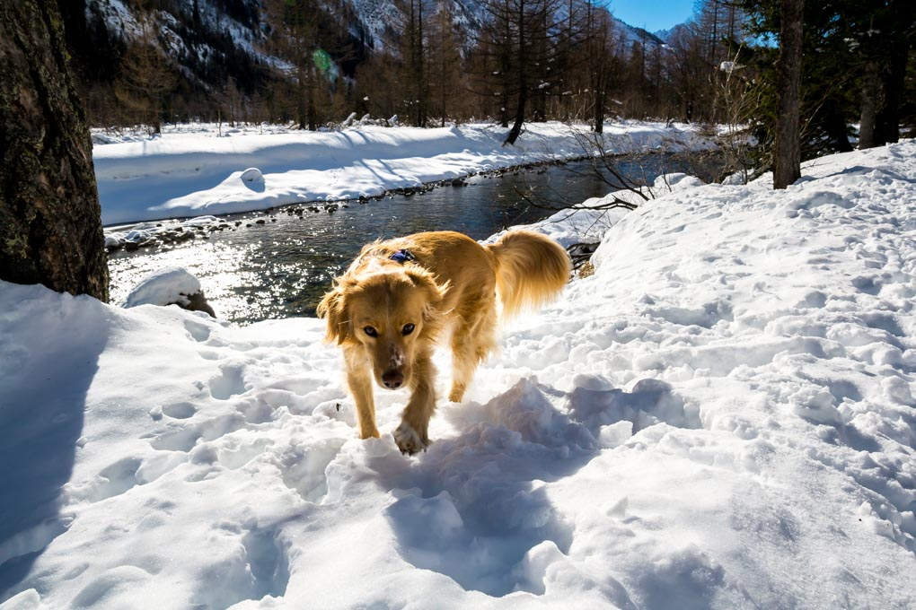 Cosa fare in Val Ferret in inverno - Vacanza con il cane