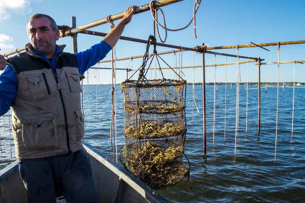 Laghi di Puglia: Coltivazione ostriche Varano