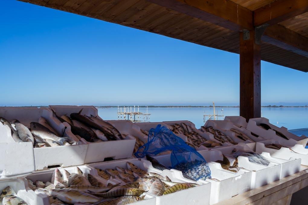 Mercato del pesce di Lesina