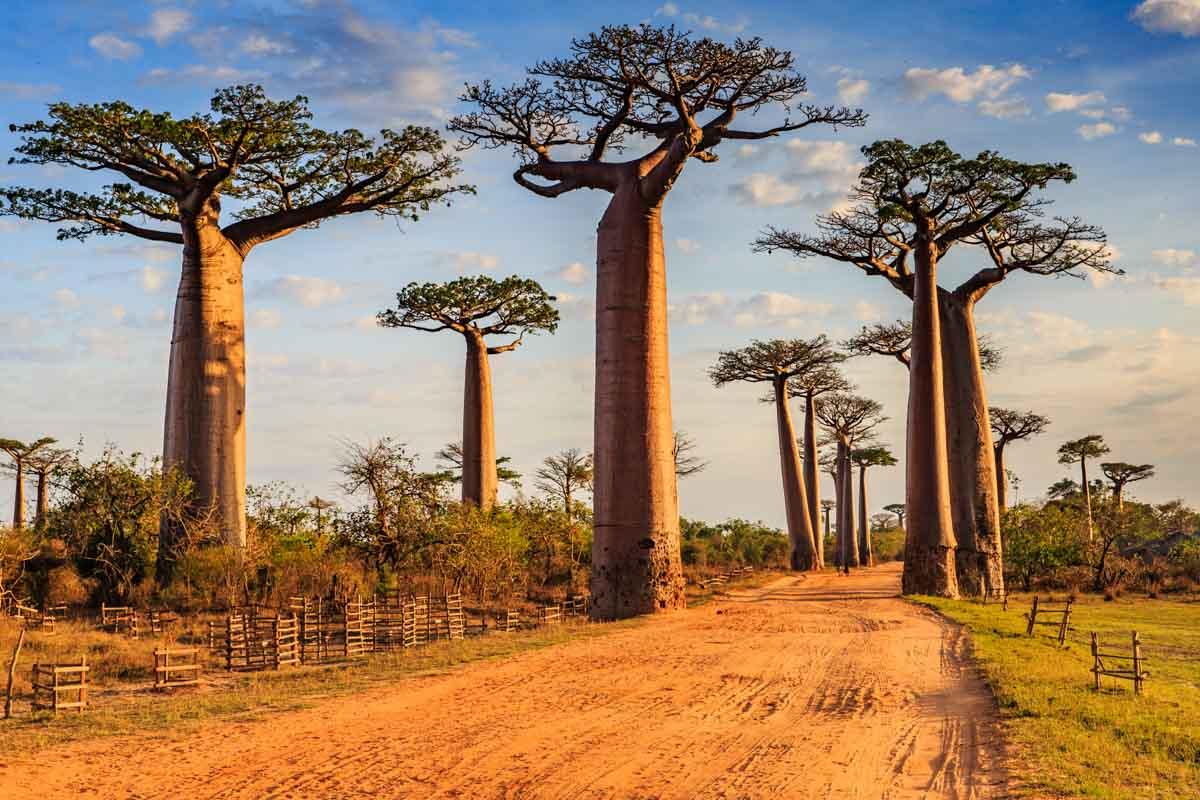 Dove andare in vacanza a giugno: Madagascar