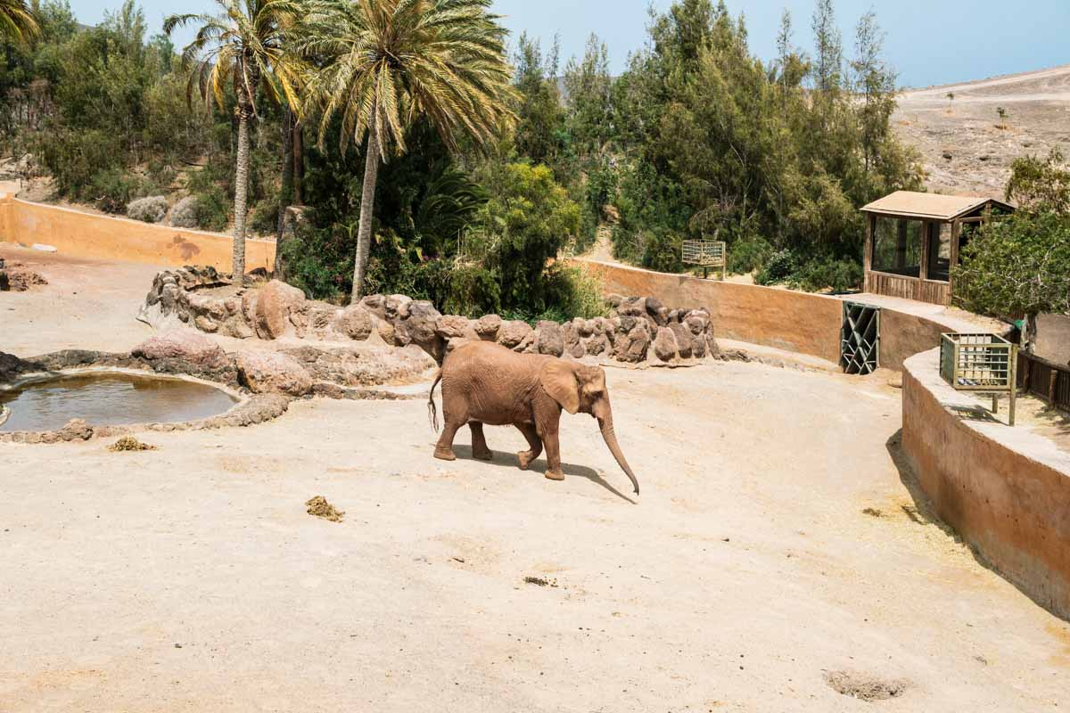 Oasis Park Fuerteventura elefante