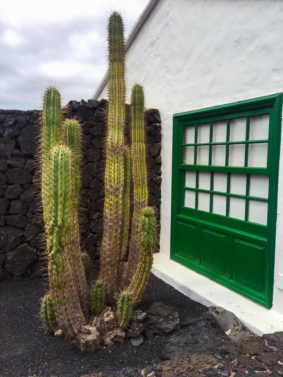 Cactus e porte verdi Lanzarote