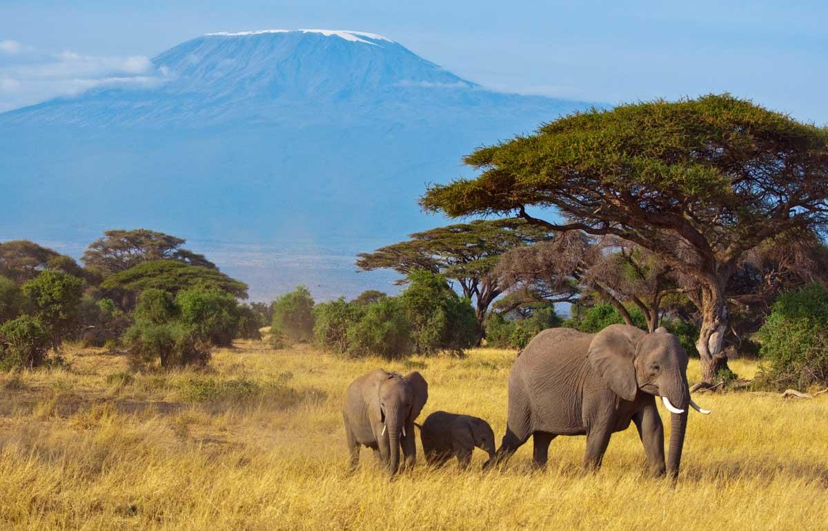 Viaggio di nozze avventuroso: Tanzania Safari