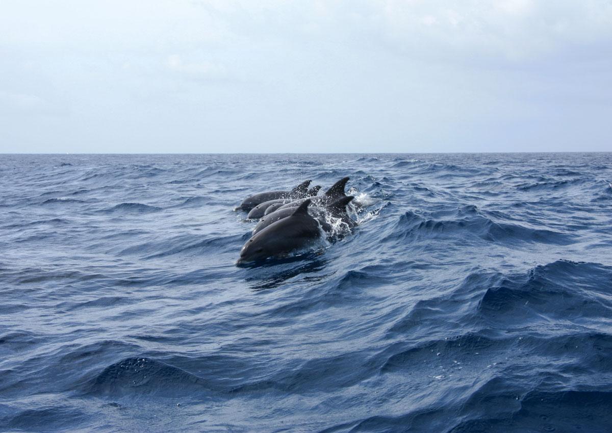 Avvistamento delfini in Liguria