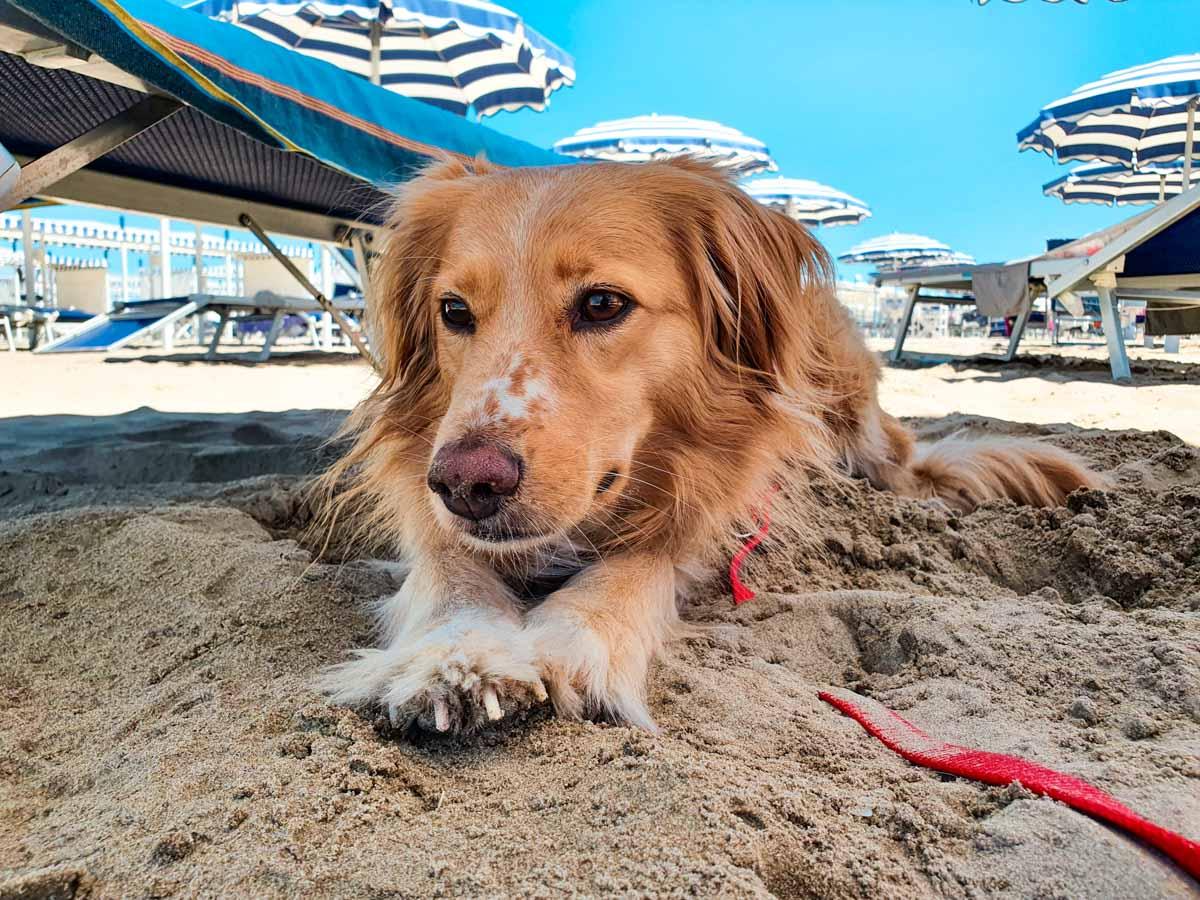 Cane in spiaggia Riccione