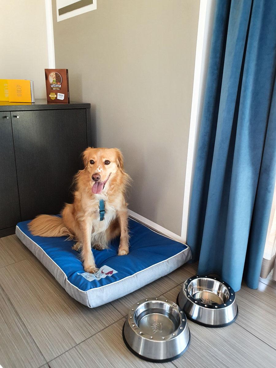 Cuccia - ciotola e cibo per cani - hotel pet friendly Riccione