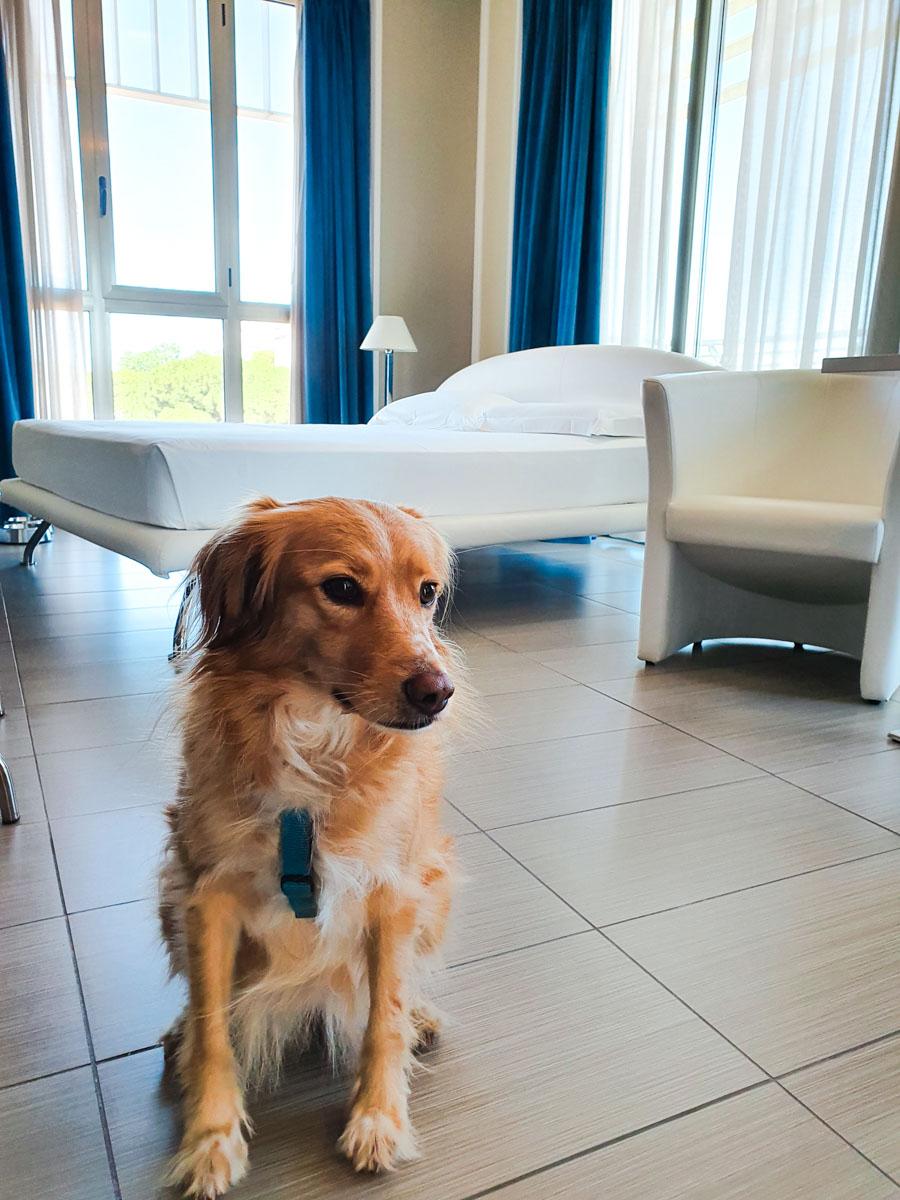 Cane in Camera Hotel The One Riccione