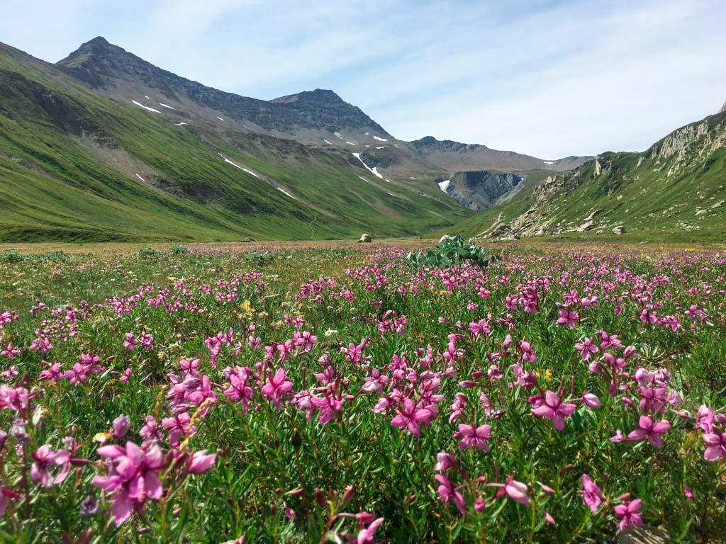 Piana con vista sul Col de la Seigne